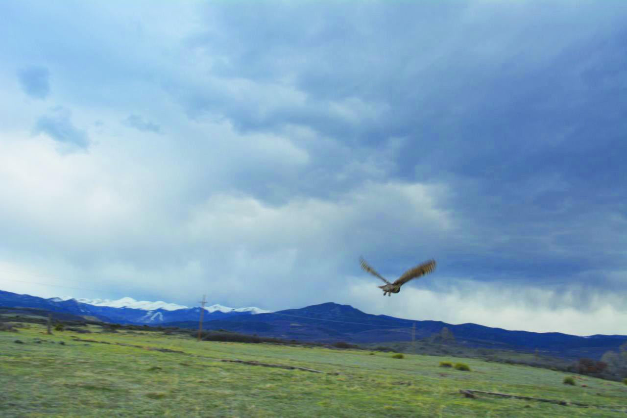 1617 HC Kennemer OWl release 3 DSC_0231