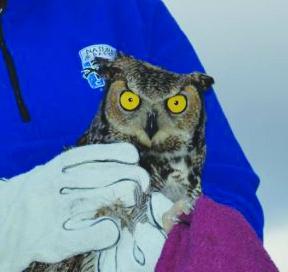 1617 HC Kennemer Owl release alternative DSC_0223