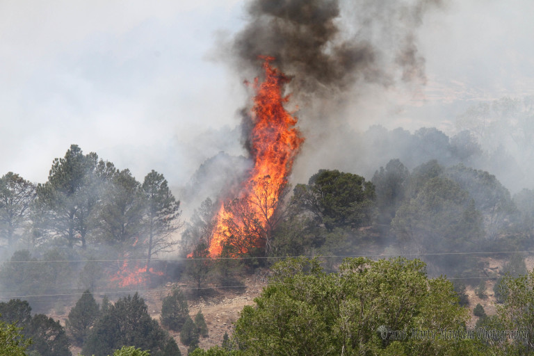 The fire jumped and moved, driven by erratic canyon winds just west of Raton that Sunday afternoon in June. Photo by Marty Mayfield.