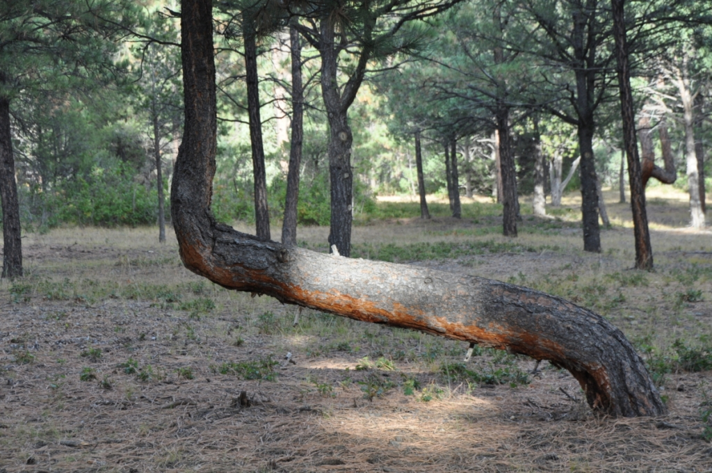 This burial tree was photographed by Susanne and Terry Broomfield.