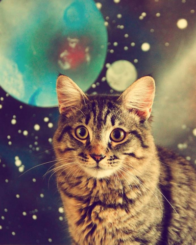 1808-Popovich-contest-Galactic-cat-Tiger-fry-owned-by-Jonathan-Smith-of-New-LEgends--400x500.jpg